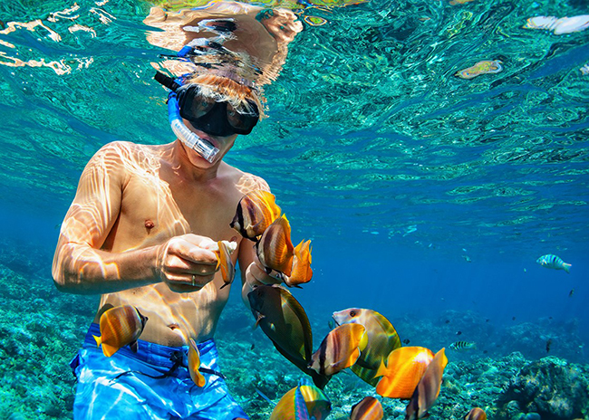 Leroy feeding fish while he snorkels above a coral reef in Cozumel.